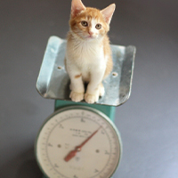 体重増加などによる巻き爪